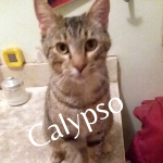 Calypso First Day of Rescue