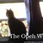 Rescuing feral cats has it rewards and mayhem stories. Here is the beginning of our story.